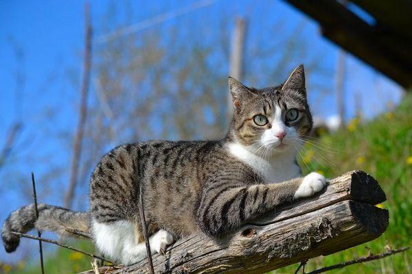Кішка на природі