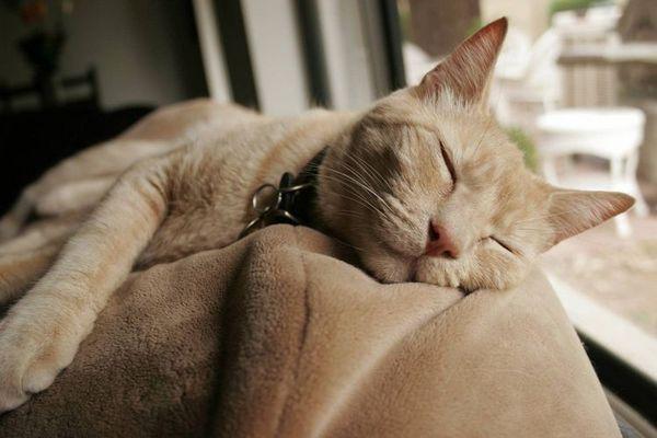 Кішка спить