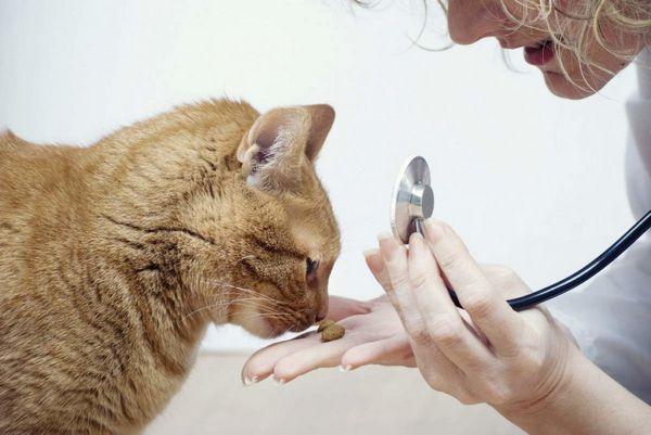 Глисти у кішок