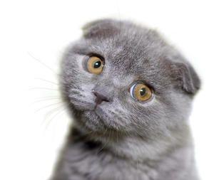 Як визначити, чи є глисти у вашого кота?