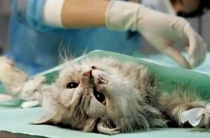 Найчастіше господарі виявляють глисти в калі хворої тварини.