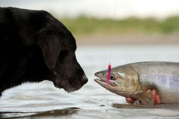 Собака нюхає рибу