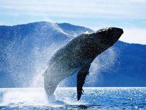 Biotop veľryby modrej