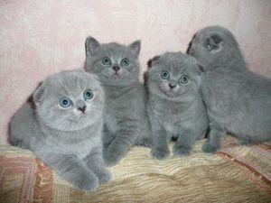 Кошенята і догляд за ними
