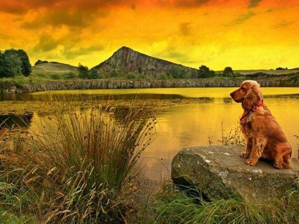 Ці мисливські собаки вкрай витривалі, люблять навантаження і довгі прогулянки, швидко навчаються, завжди кидаються на захист господарів, ладнають з дітьми