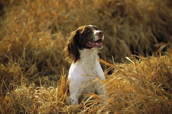 Собака відрізняється живим темпераментом, веселою вдачею і розумом. Підходить для утримання в квартирі
