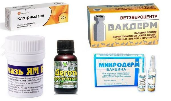 Препарати для лікування грибка у собак