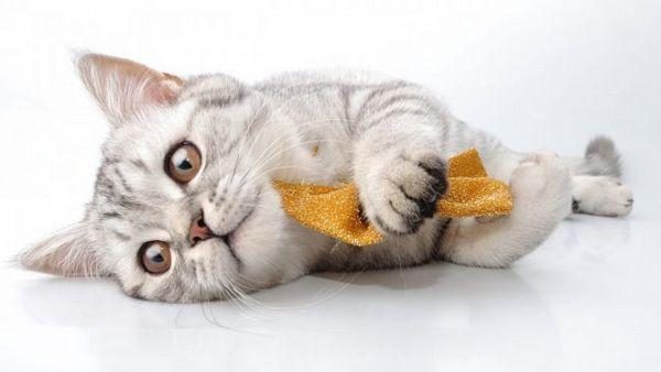 Грумінг кішок на дому