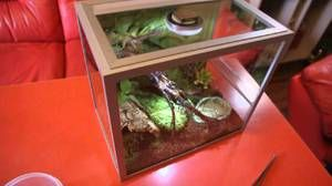 Škorpión doma
