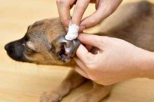 Інструкція по застосуванню препарату фунгин для собак і кішок