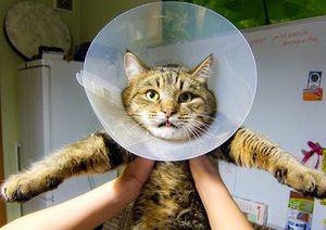 Особливі вказівки до застосування фунгин для лікування собак і кішок