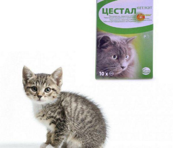 Цестал для кішок застосовують з профілактичною і лікувальною метою при нематодозах і цестодозах