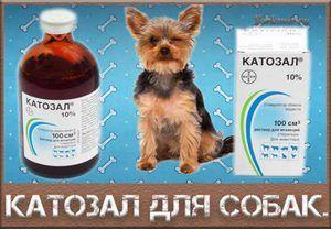 Препарат Катозал для собак