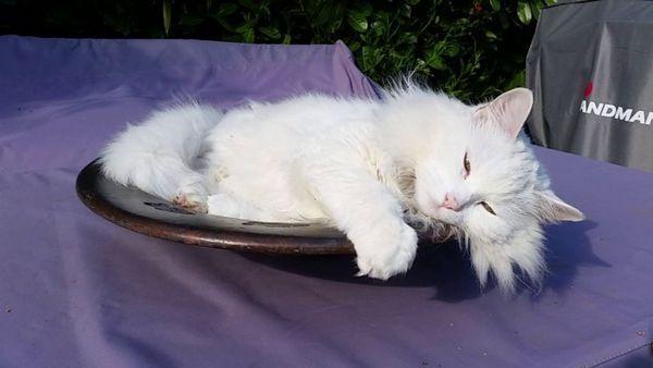 Кот під дією препарату