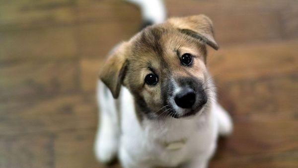 При виявленні глистів у свого чотириногого друга необхідно звернутися до ветеринара