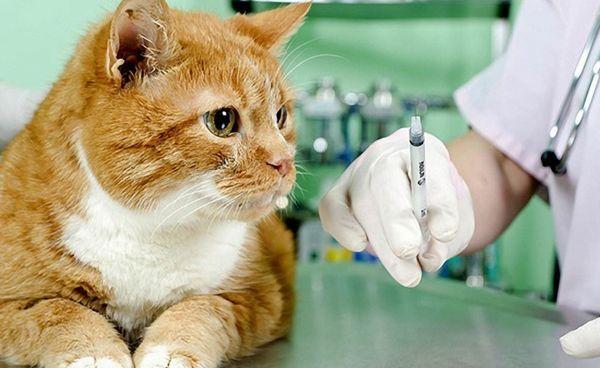 Вакцина вводиться під шкіру