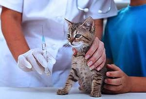 Інструкція застосування Вітафел С для лікування кішок