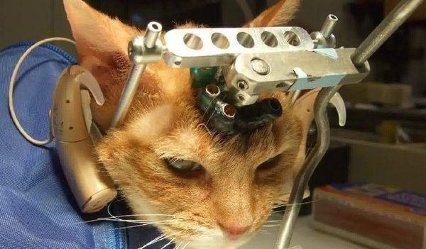 Разнообразие от инсулт на котка