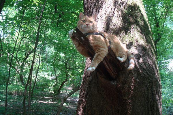 Нашийник GPS Для кішок