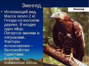 Ohrozené a vyhynuté druhy zvierat