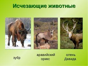 Чи не існуючі види тварин на сьогоднішній день