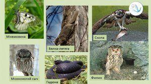 Список тварин під загрозою на сьогоднішній день