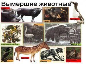 Види вимираючих тварин