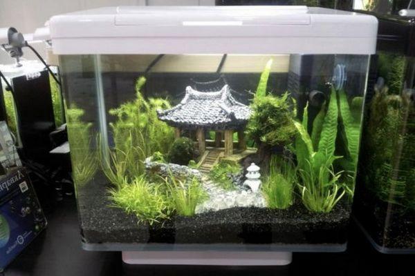 акваріум
