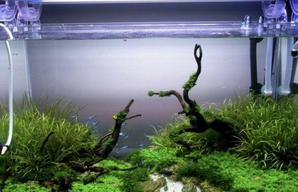 Штучні рослини для акваріума