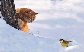 Връзката между котките и птиците