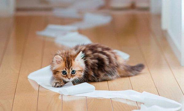 як позбутися від запаху котячої сечі