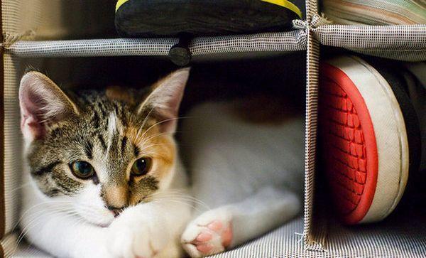 Як вивести запах котячої сечі з взуття