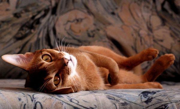 Позбавляємося від запаху котячої сечі з дивана