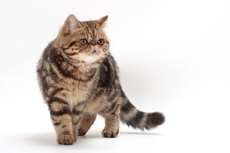 Здрава котка = красива котка