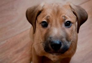 Ентерит при кучета: разновидности, симптоми, лечение и превантивни мерки