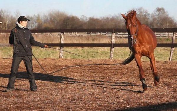 Кінь на корду