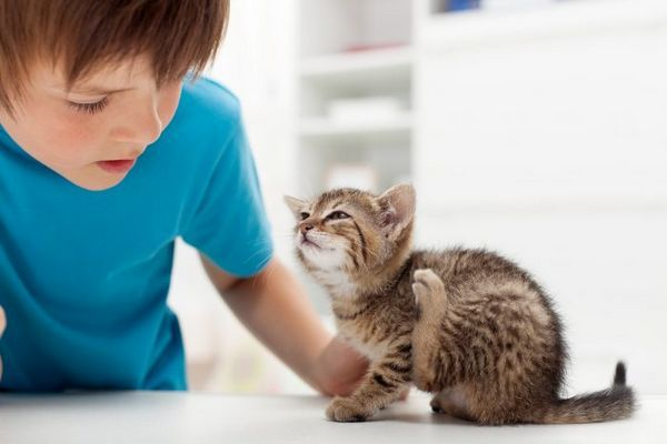 Хлопчик і кошеня