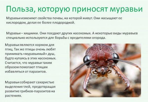 Ako naložiť s mravcami
