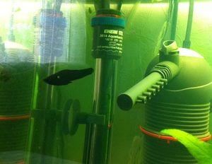 Очистити акваріум від водоростей