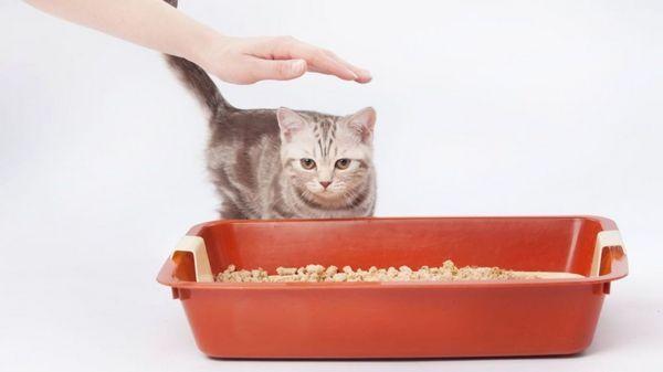 Як швидко привчити кошеня до лотка в квартирі