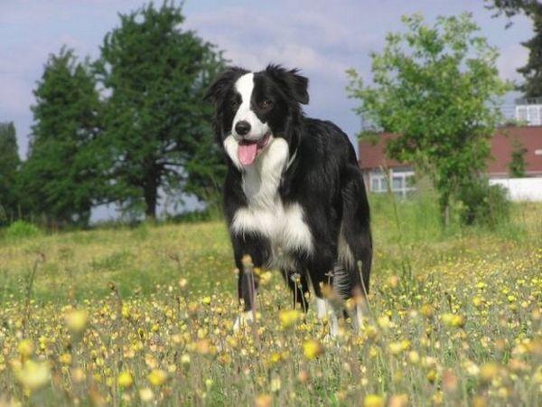 Собака від 5 до 40 кг