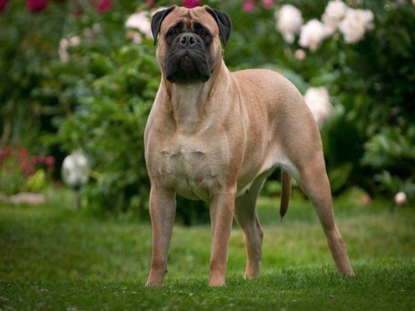 Собака від 40 кг