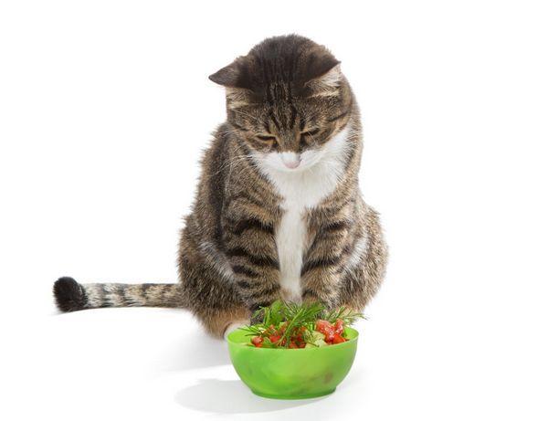 Vitamíny pre tehotné mačky