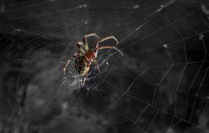Как и защо паяк тъче паяжина