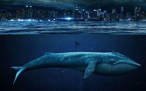 Veľká modrá veľryba na pozadí mesta pre porovnanie - foto