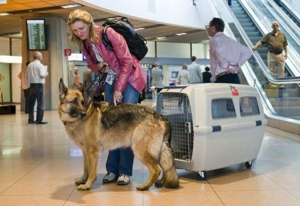 Ako a pri akom prevoze zvieratá prepravovať, aby im neubližovali