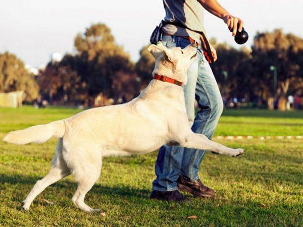 Ігри з собакою