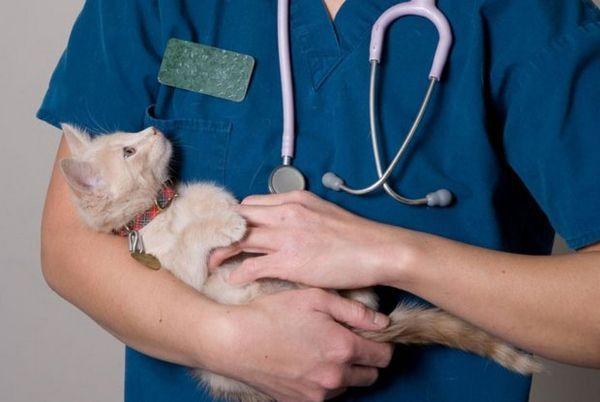 Кішка у ветеринара