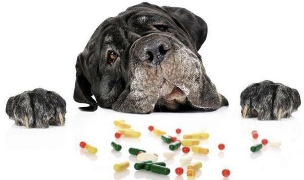 Собака і медикаменти
