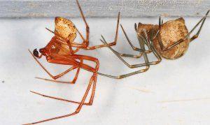 Как да се отървете от паяците завинаги: народни средства, химия.